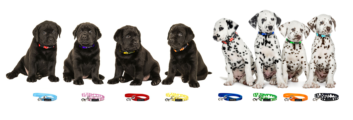 Wagging Tailz Tiny Totz Collars & Matching Leads