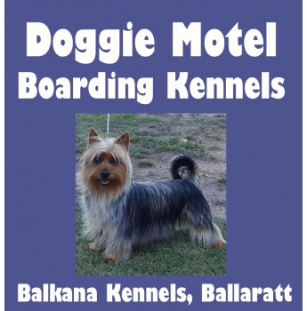 Doggie Motel - Pet Boarding for Dogs & Cats - Ballarat, VIC