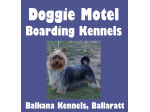 Doggie Motel - Pet Boarding for Dogs & Cats - Ballarat, VIC