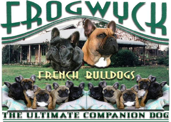 Frogwyck Kennels - French Bulldog Breeder - Kurrajong, NSW