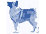Norwegian Elkhound Club of NSW