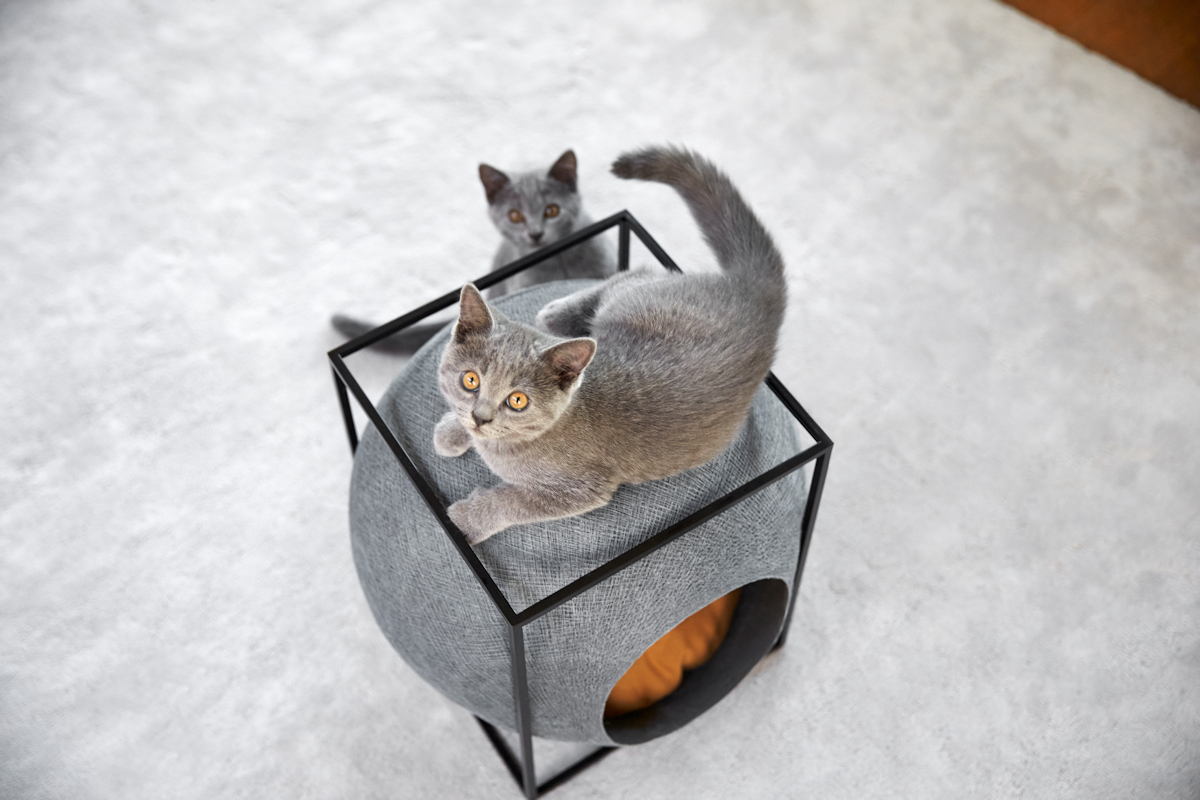 MeYou Cat Bed The Cube gallery image
