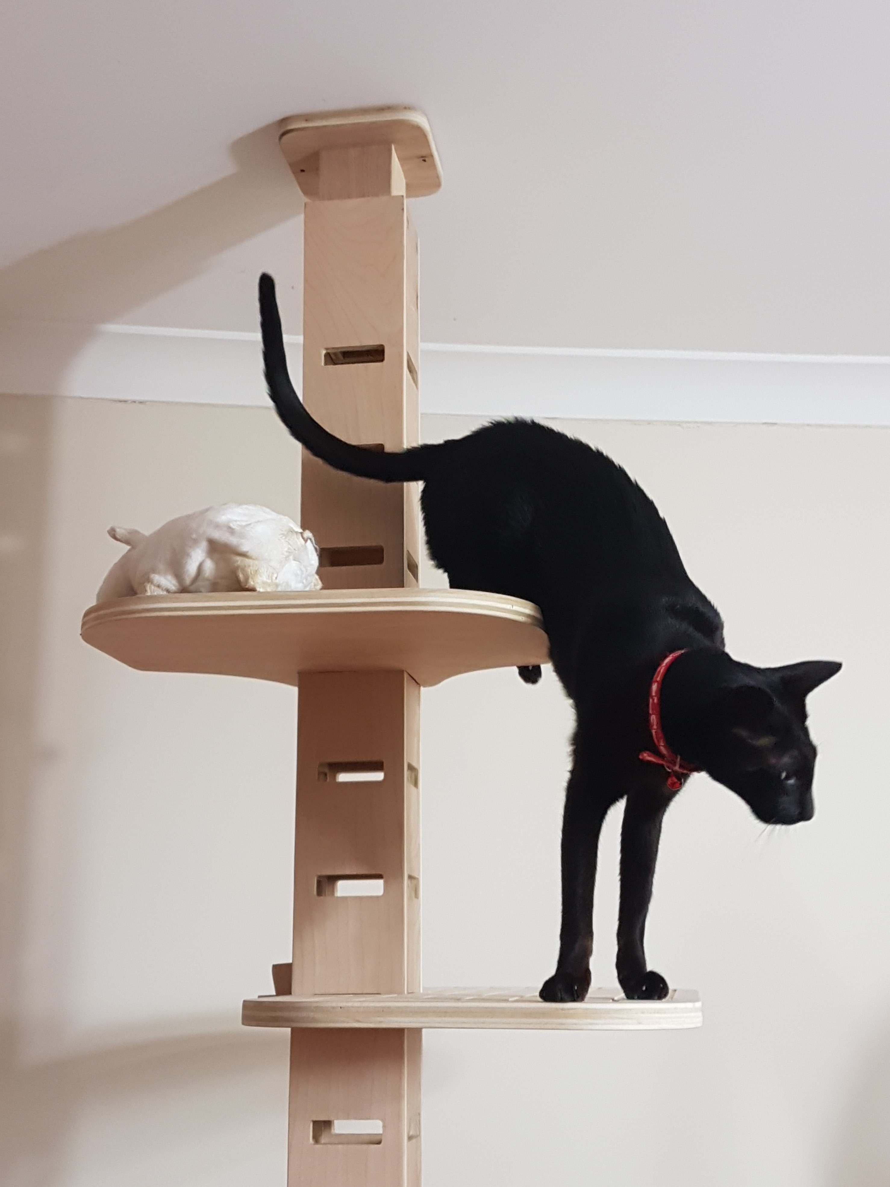 Elevation Cat Towers gallery image