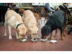 The Pancake Parlour - Dog Friendly Cafe, Melbourne