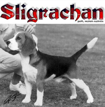 CH Sligrachan Drumfearn - one of the original Cham gallery image