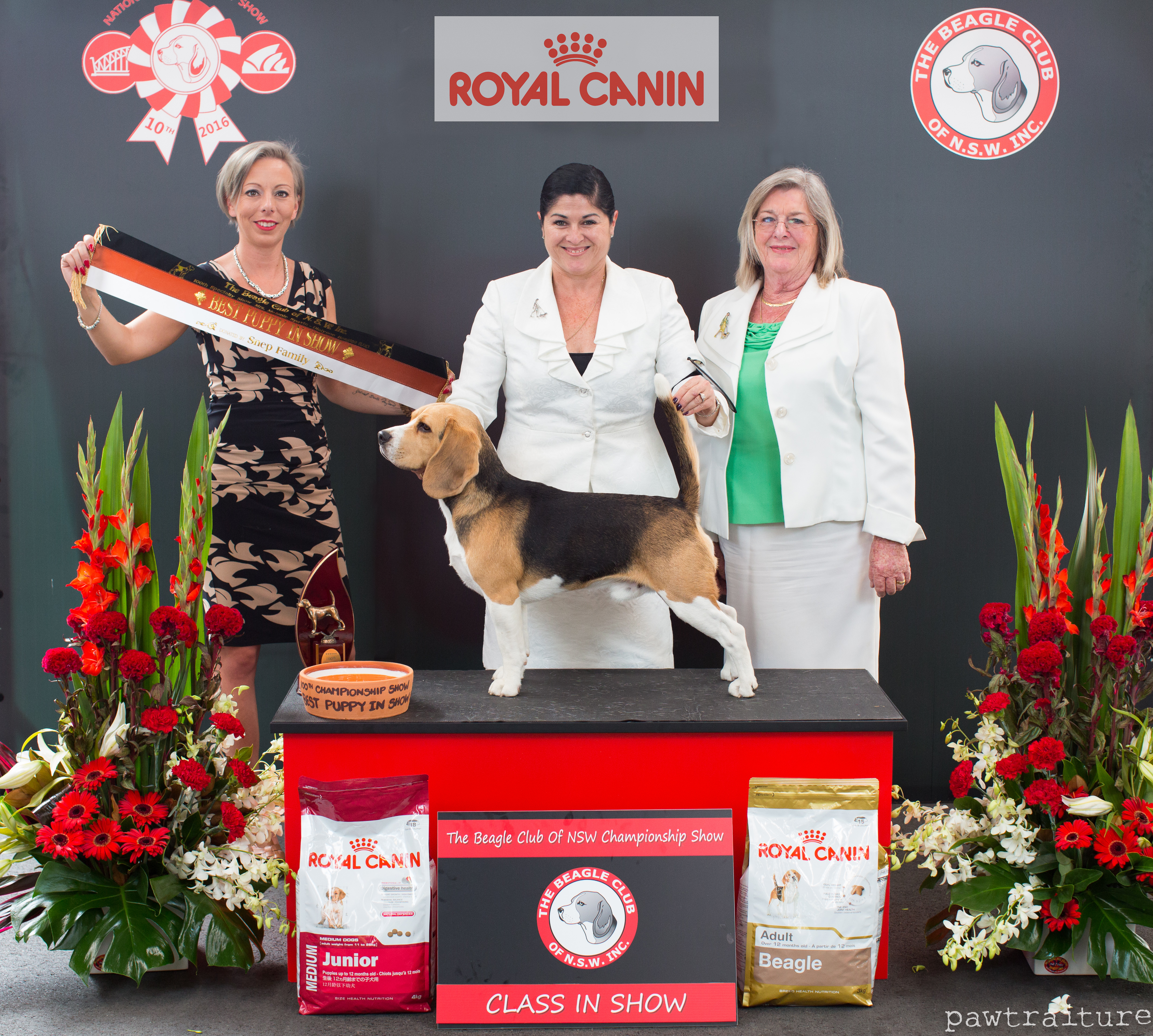 Beagle Specialty Show , Sydney 2016 gallery image
