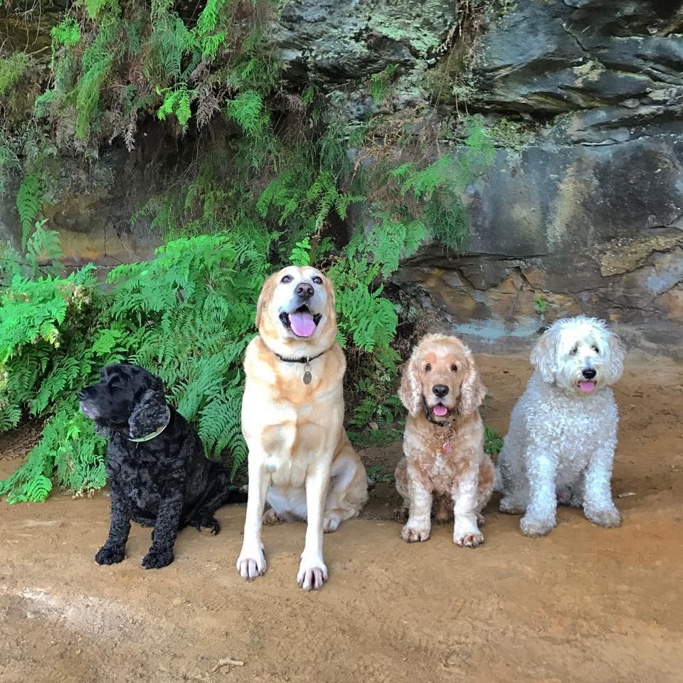 A fun group walk adventure in Queens Park
