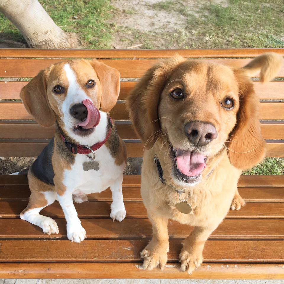 Cheese! Two happy pups on their dog walk gallery image