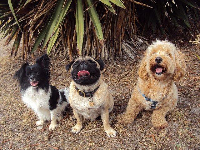Three little puppitas gallery image
