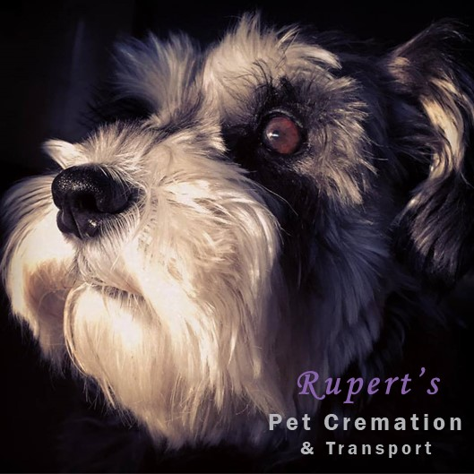 CEO of Rupert's Pet Cremation & Transport