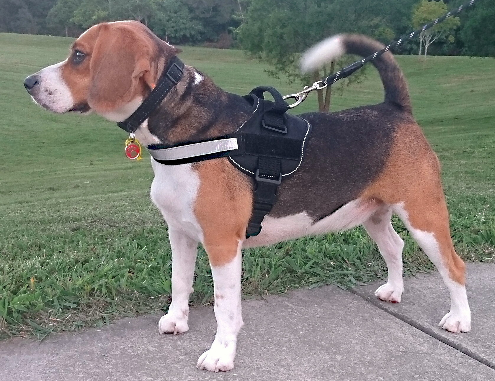 Dog Harness gallery image