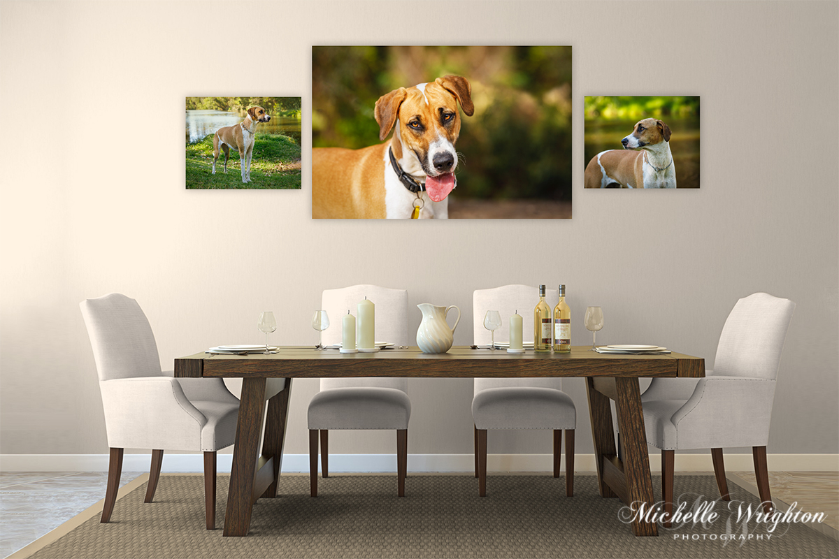 Pet Portrait Photography Wall art collection