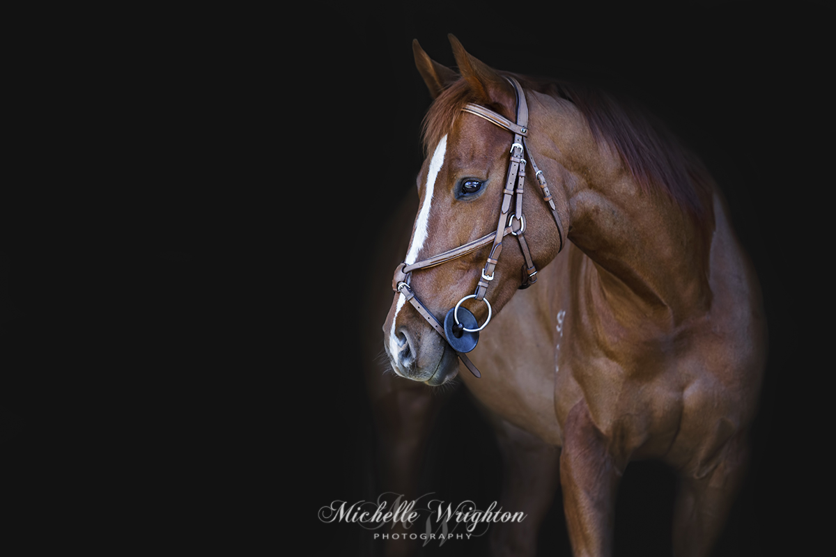 Fine Art Equine Photography gallery image