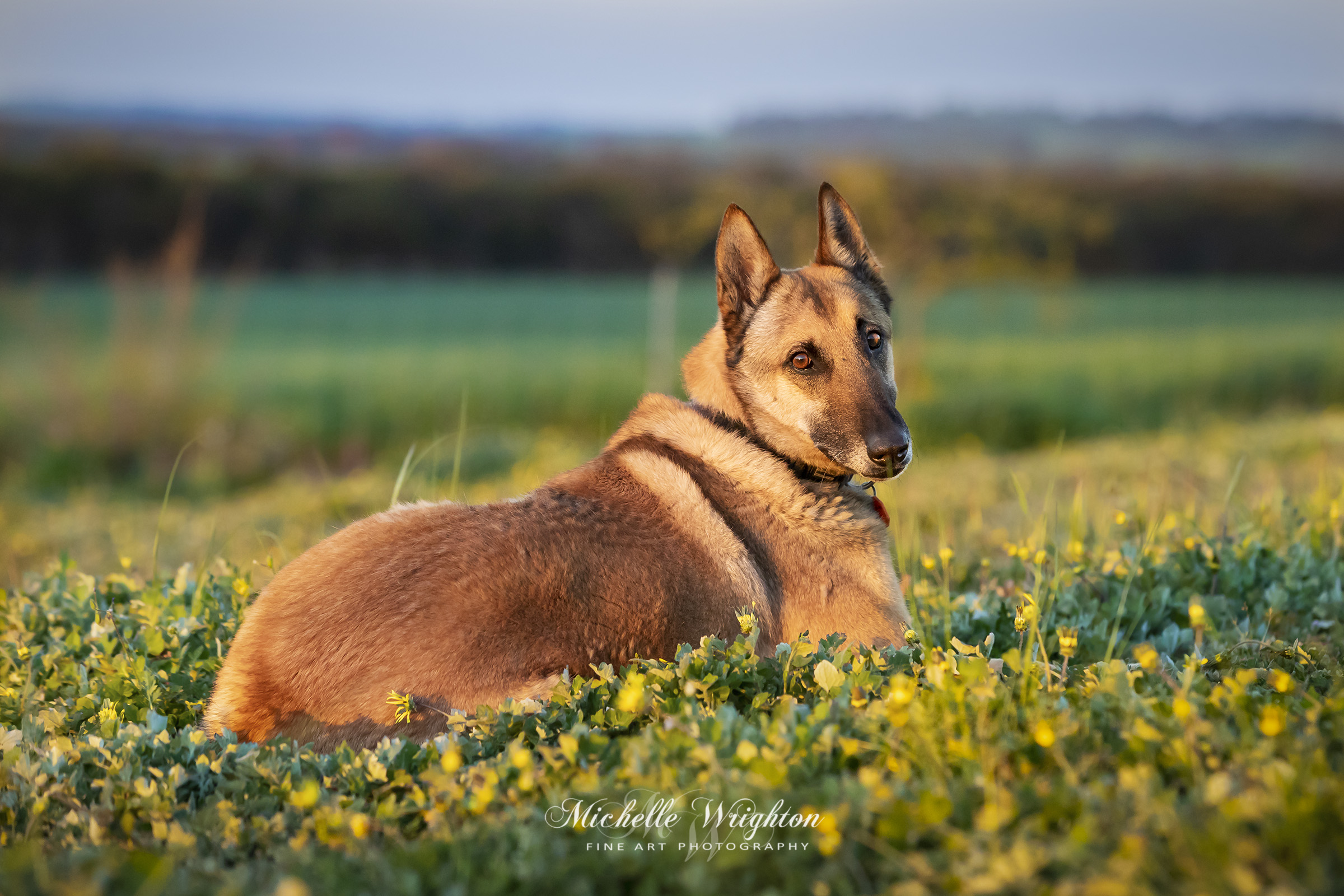 Dog Portrait Photography gallery image