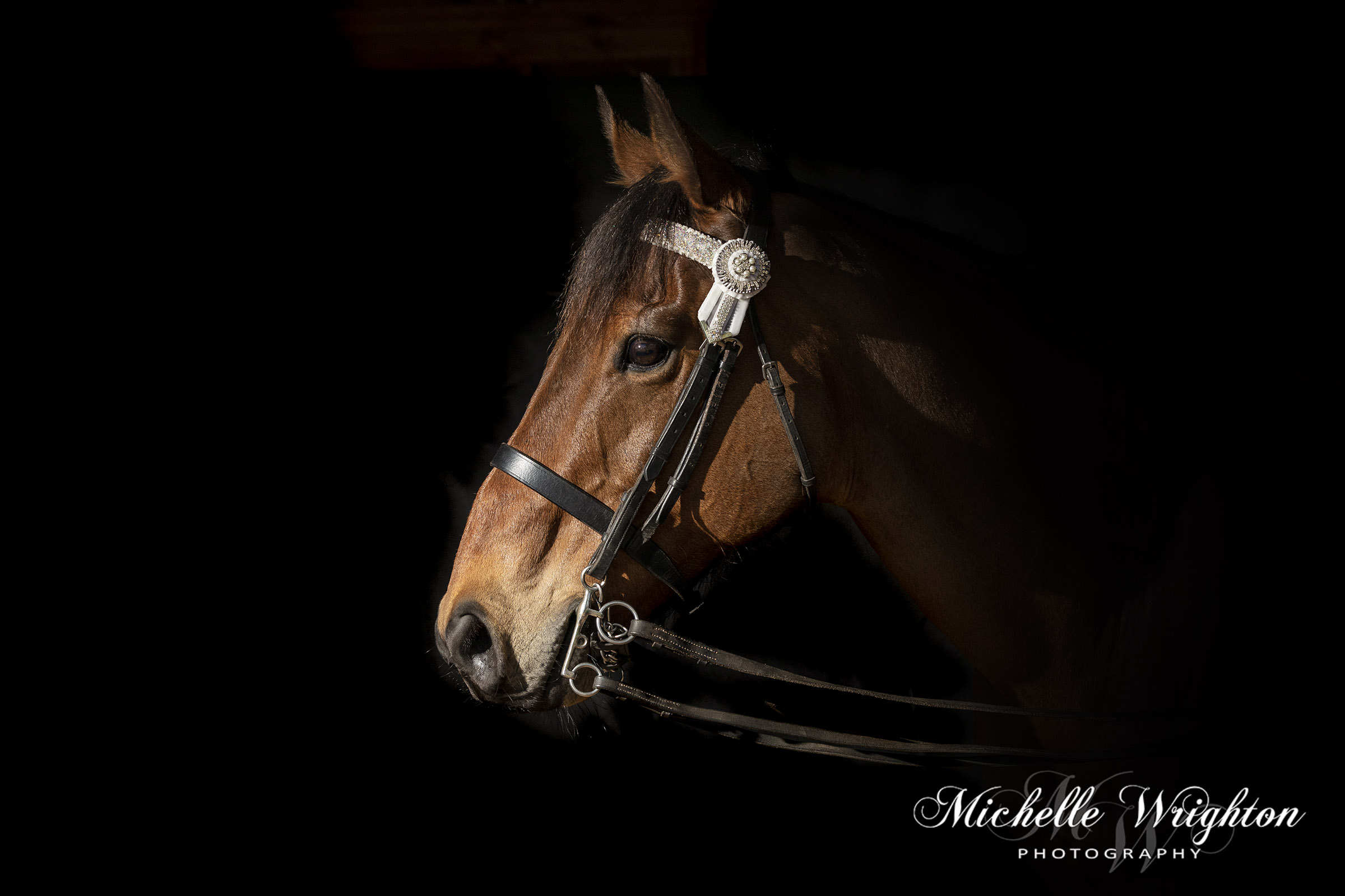 Black background Horse Portrait Photography gallery image