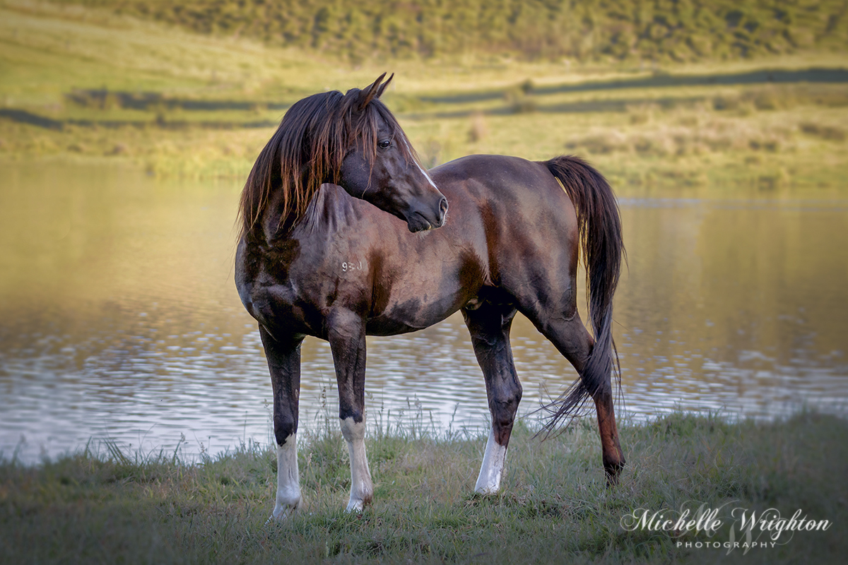 Horse Portrait Photography gallery image
