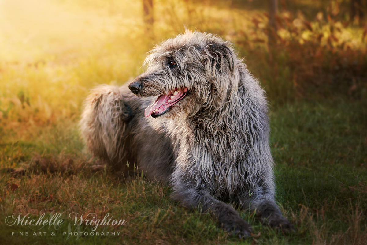 Dog Pet Portrait Photography gallery image