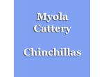 Myola Cattery - Chinchilla Breeder,  Perth, WA
