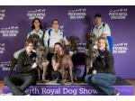 Cymroz - Great Dane Breeder - Perth, WA