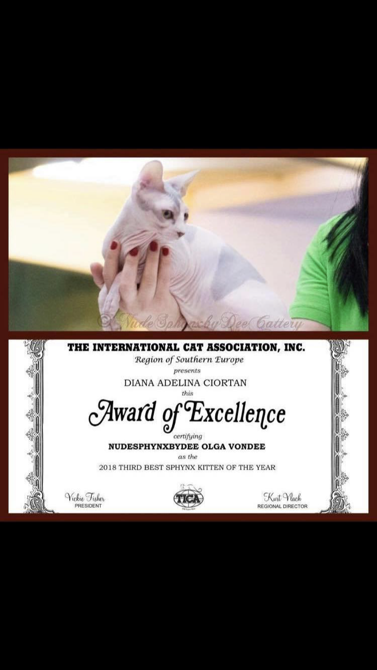 Awarded cattery of excellence 2019