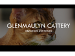 Glenmaulyn Cattery : Abyssinian & Somali Cat Breeder - Perth, WA