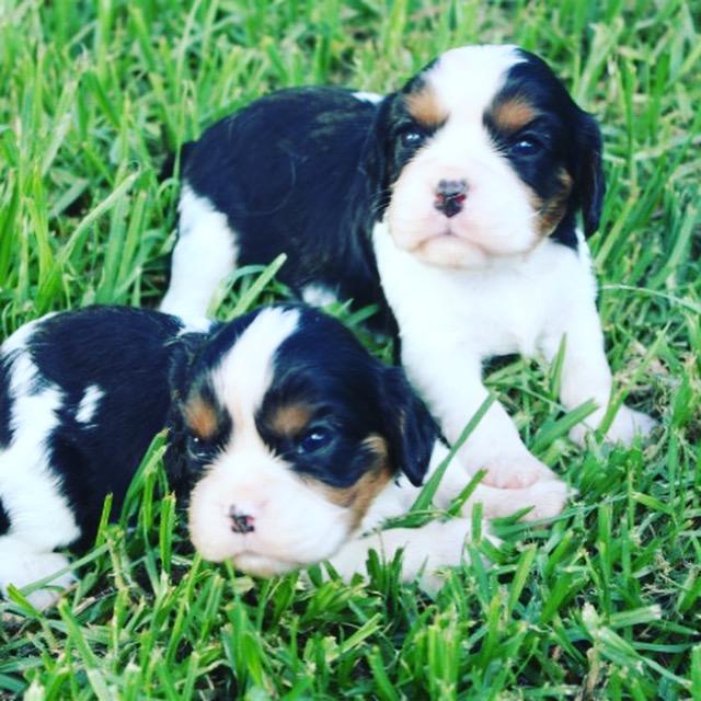 Parknee Puppies 2018 gallery image