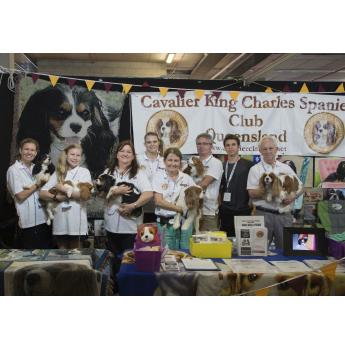 Cavalier King Charles Spaniel Club of Queensland