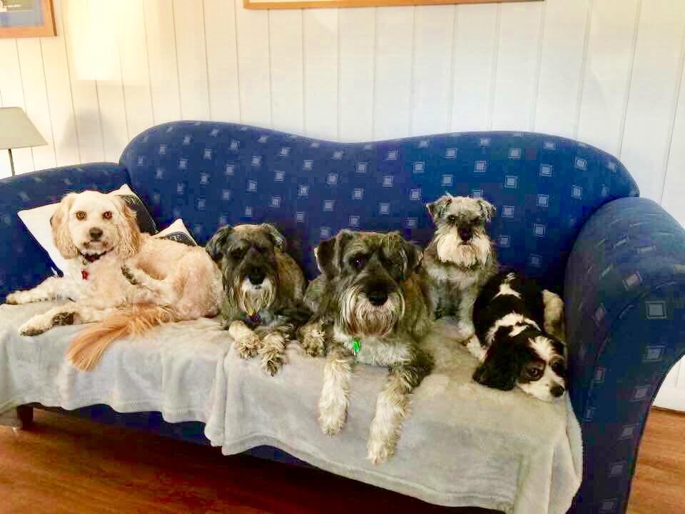 Good Doggies  gallery image