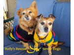 Hollys Rescue - Dog rehoming and adoption - Maitland, SA