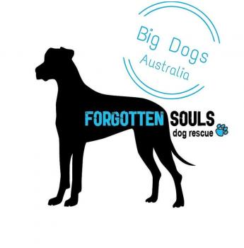Dogs & Puppies, Pet Rescue, Animal Shelters in Victoria, VIC