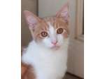 Paws of Love - Animal Rescue, Rehabillitation and Re-homing - Melbourne, VIC