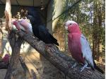 Parrot Rescue Centre - Bird Boarding - Gold Coast, QLD