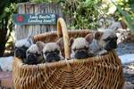puppies gallery image