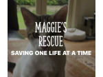 Maggie's Rescue - Animal Re-homing and Adoption - Sydney, NSW