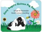 Cavy Angel's Guinea Pig Rescue - Gold Coast, QLD
