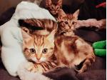 Sweethaven Rescue - Cat Rescue and Adoption - Gosford, NSW