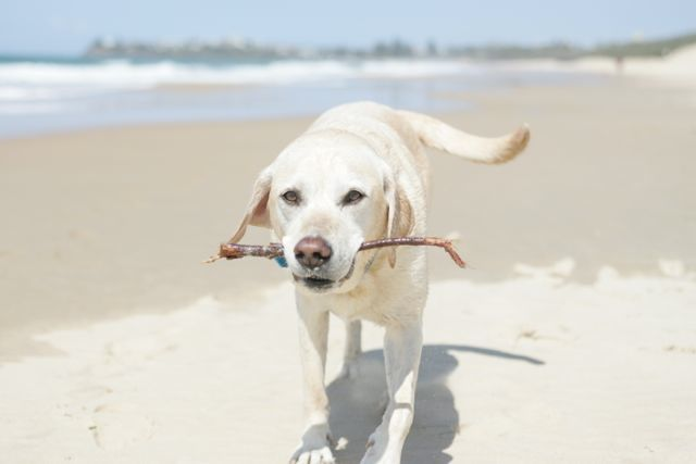 Dog friendly beach guide gallery image
