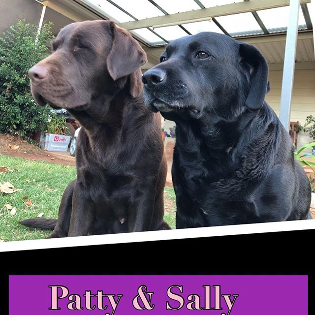 Phenwick Annies Song (Patty) Lacote Sweet Sally (S gallery image