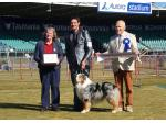 Sanpasho - Australian Shepherd Breeder - Kayena, TAS