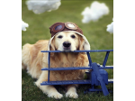 Fly4Paws - Connecting Volunteer Pilots with Rescue Animals