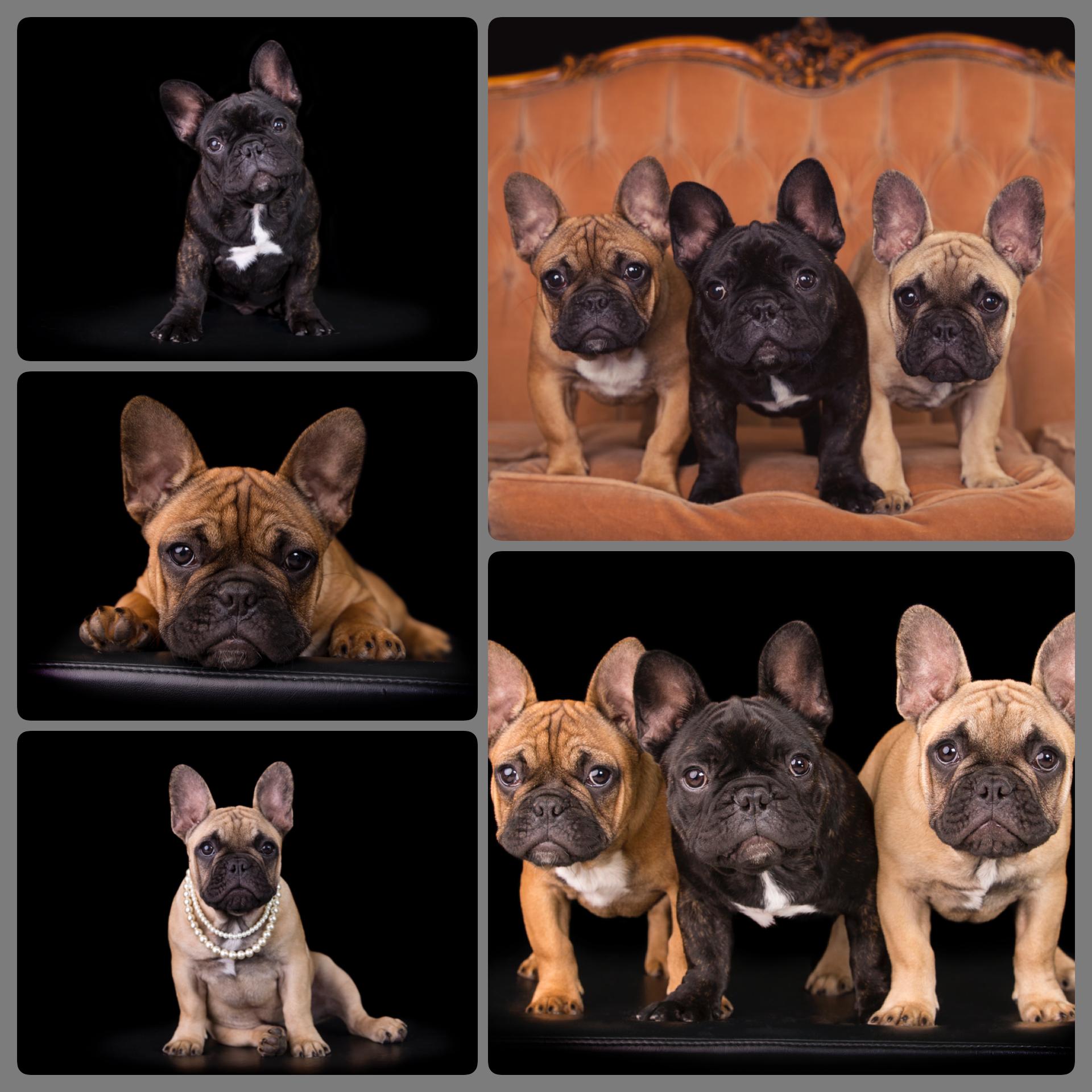 Starzlechein Puppies