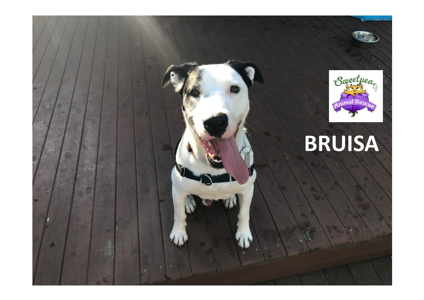 Bruisa - Available for Adoption gallery image