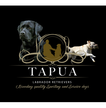Registered Labrador Retriever Dog Breeders in Canberra