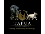 Tapua Labrador Retriever Breeder - Woodstock, NSW