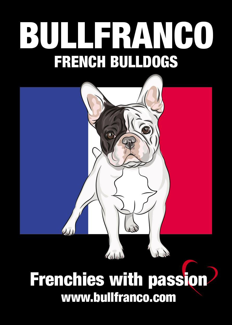 Bullfranco French Bulldogs  gallery image
