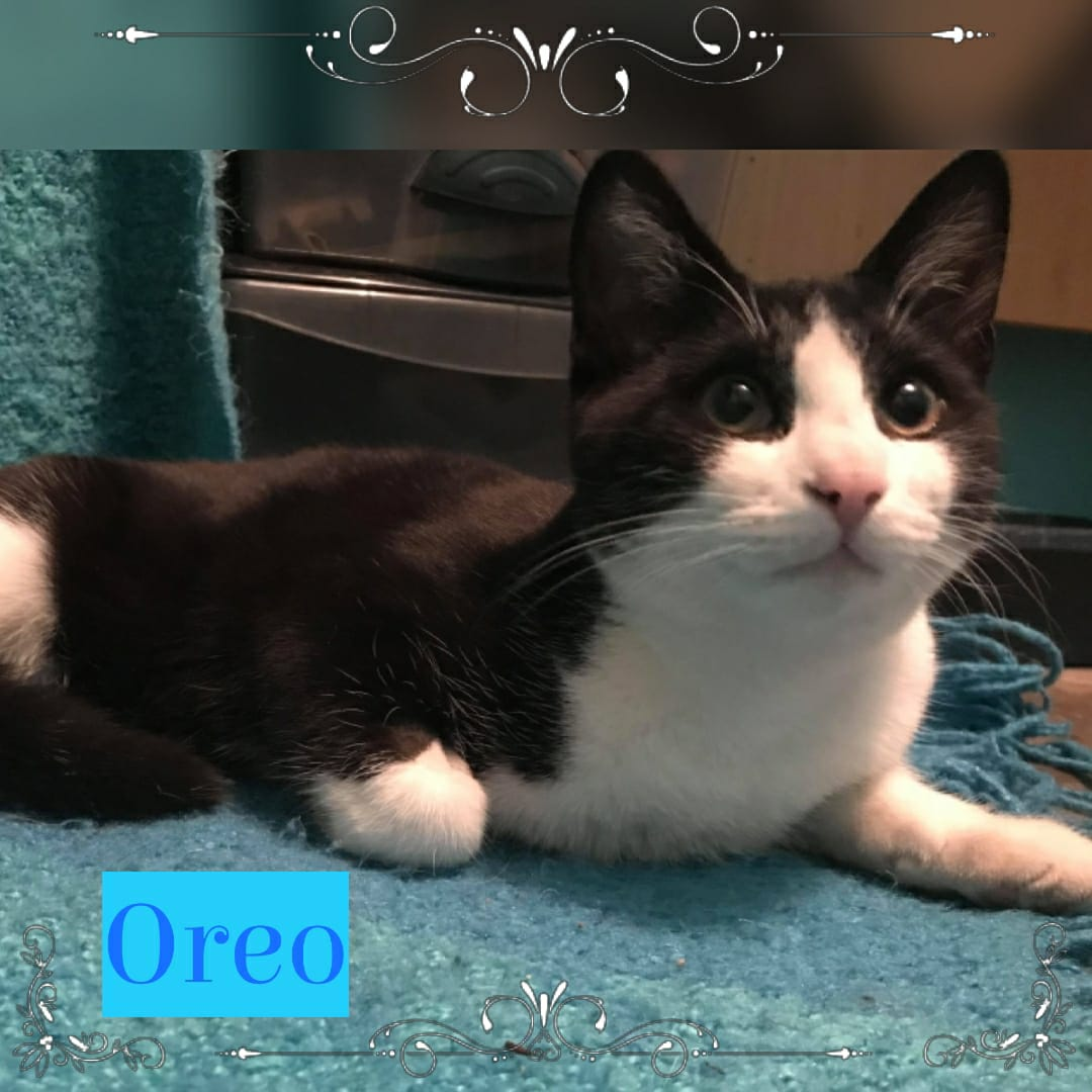Oreo gallery image