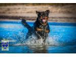 STAHLGRIFF ROTTWEILERS - Rottweiler Breeder, Perth WA