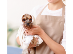 A Love Dog Grooming Salon and Daycare - Morphetville, Adelaide, SA