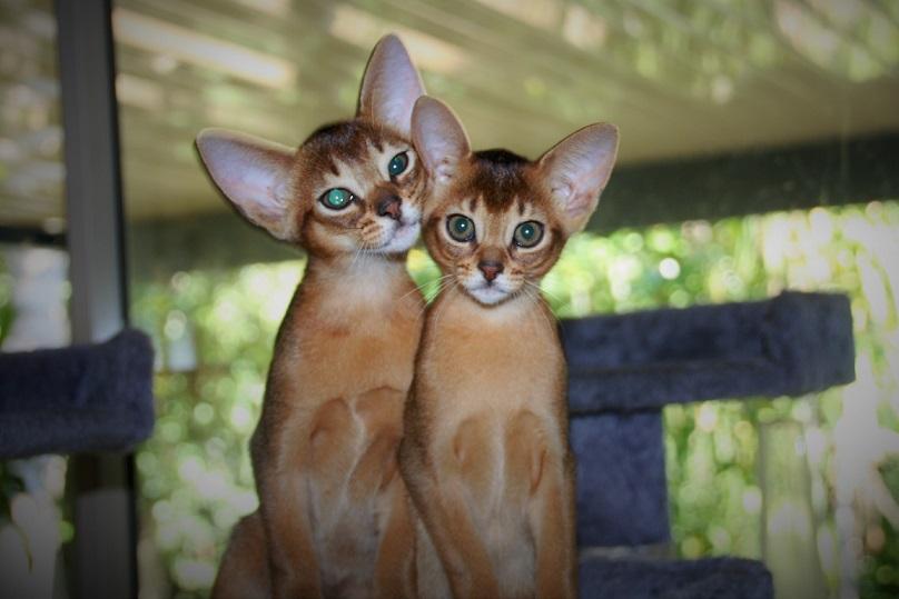2 kitten gallery image