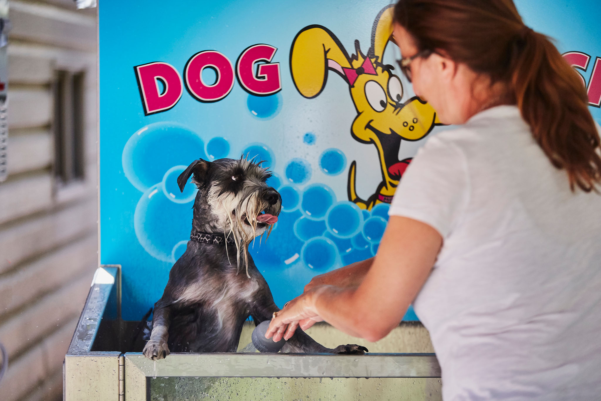Our DIY Dog Wash!  gallery image